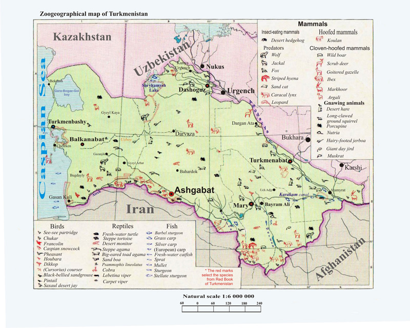 Travel to Turkmenistan. Maps, tours, trips to Turkmenistan on simpson desert on a map, mojave desert on a map, iranian desert map, gibson desert on a map, arabian desert on a map, taklimakan desert on a map, thar desert on a map, great basin desert on a map, syrian desert on a map, caspian desert on a map, sonoran desert on a map, chihuahuan desert on a map, siberia desert map, great victoria desert on a map, great sandy desert on a map, atacama desert on a map, taklamakan desert on a map, gobi desert on a map, kalahari desert on a map, namib desert on a map,